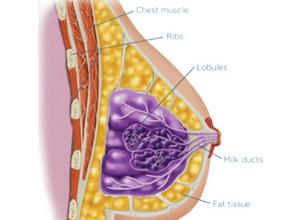 Что лучше маммография или узи молочных желез