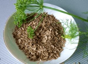 Отвар семян укропа для лечения цистита