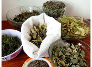 тимьян и березовые почки