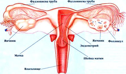 Трубное бесплодие или непроходимость
