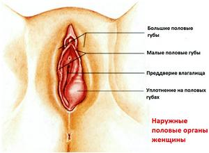 отёчность половых органов