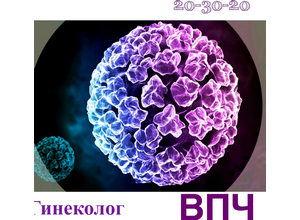 Что представляет собой вирус папилломы человека в гинекологии