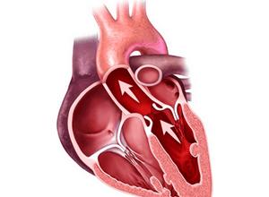 работу сердечной мышцы