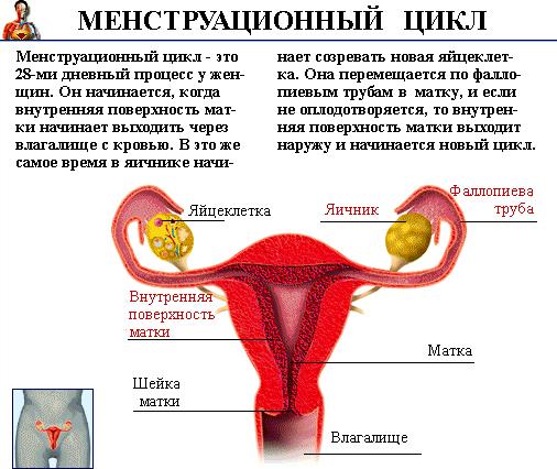 Месячные пришли раньше срока могу ли я быть беременной 16