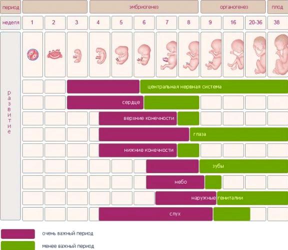 Срок беременности