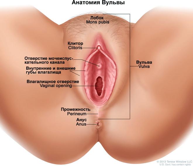 Как выглядит писька при сексе