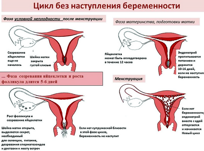 Секс на 5 день менструации возможна беременность