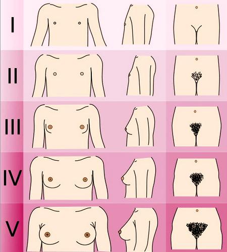фаза полового созревания