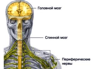 нарушения нервной системы