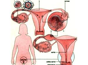 определения внематочной беременности