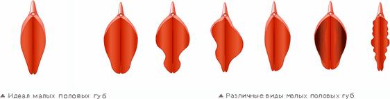 внутренние половые губы