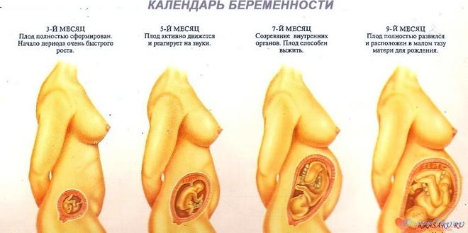 Сроки беременности акушерский и эмбриональный
