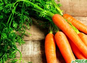 Маска из эликсира семян моркови