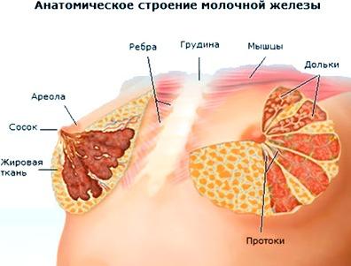 Как лечить диффузную мастопатию