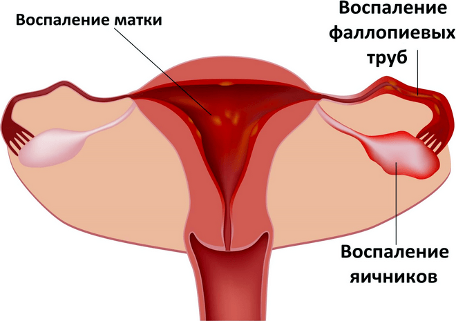 Анатомия матки женщины