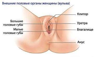 сухие половые губы